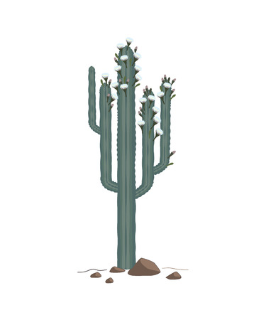 saguaro: Blossoming cactus. Tall and old cactus illustration Illustration