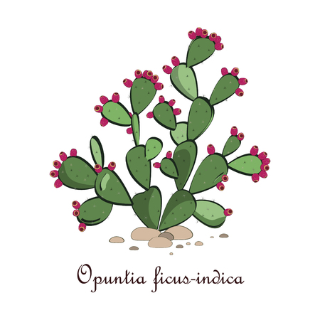 prickly pear: Prickly pear cactus with fruits