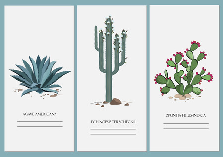 prickly pear: Business cards set with isolated cactus and agave design Illustration