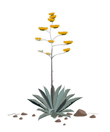 sentry: Flowers of the Agave Americana plant. Blue agave blossoming Illustration