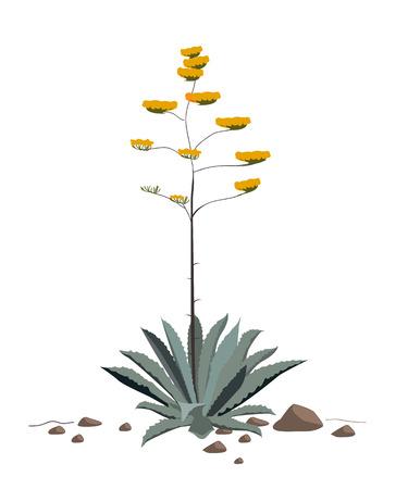 Les fleurs de la plante Agave Americana. Bleu agave éclosion