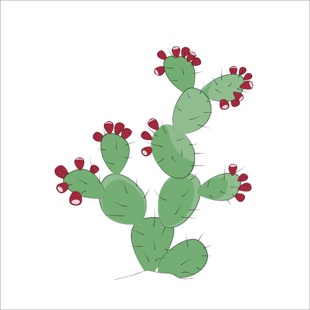 Prickly Pear Cactus vector. Simple hand drawn plant for your design. Prickly pear with fruits