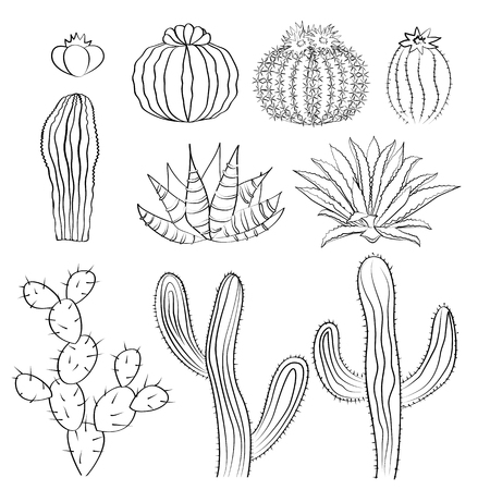 prickly pear: Hand drawn cactus sketch set. Caccti, prickly pear, and agave. Wild cacti and houseplants