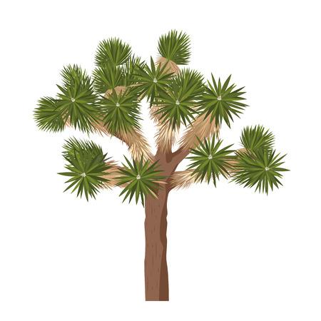 treelike: Yucca brevifolia vector. Joshua tree - isolated on white background Illustration