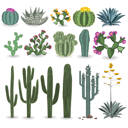 agave: Cactus and succulent vector set. Cactuses, agave, and opuntia Illustration