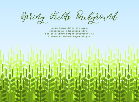 Wheat grain background. Spring agro pattern Illustration