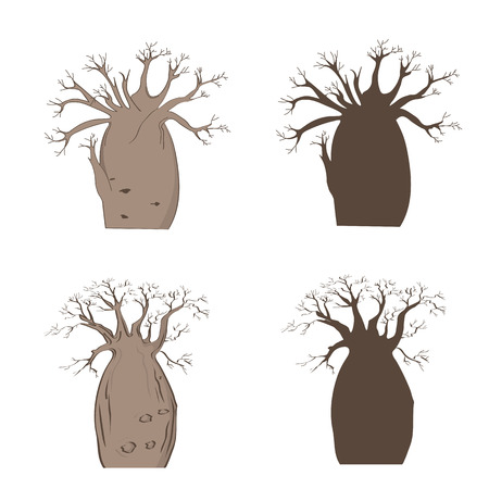 African iconic tree. Vector baobab set. Adansonia gregorii silhouette Illustration
