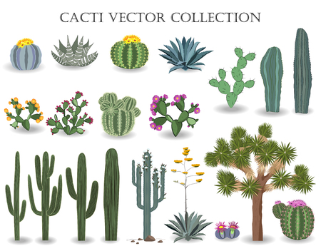 Cacti vector collection. Saguaro, agave, joshua tree, and prickly pear. Ilustração