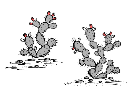Prickly Pear vector sketch. Prickly pear cactus with ripe fruits.