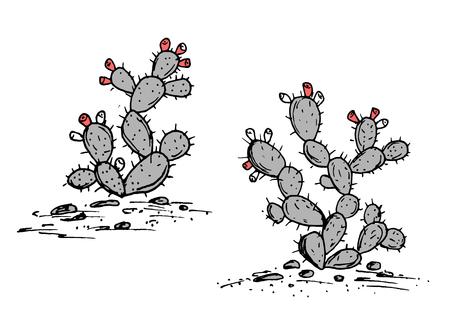 Varkenvector vector schets. Pittige Pear Cactus Met Rijpe Vruchten.