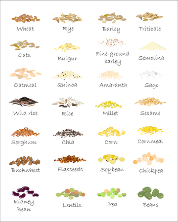 A variety of grains and cereals. Wheat, barley, oats, rye, buckwheat, amaranth, rice, millet, sorghum, quinoa, chia seeds, oatmeal, legumes. Vector isolated Ilustração