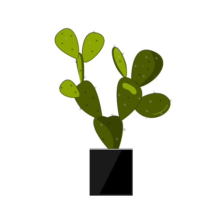Prickly pear cactus in stylish black pot. Cactus flat vector illustration on white. Home potted flower.