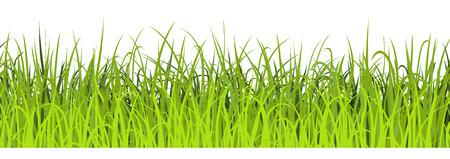 Spring green grass seamless illustration. Green meadow border. Vector illustration