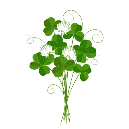 Shamrock or clover bunch, emblem of Ireland and St Patricks Day. Isolated.