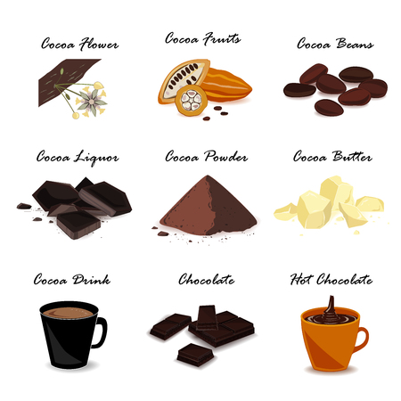 Colección de cacao super food. Vaina, frijoles, manteca de cacao, licor de cacao, chocolate, bebida de cacao y polvo. Conjunto de vectores