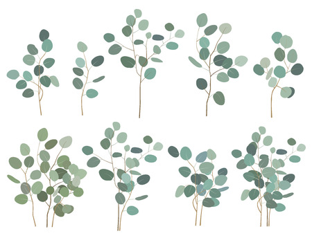 Hand painted silver dollar eucalyptus elements, branches and bouquets, isolated on white background. Vector set Illustration
