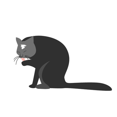 Funny hand drawn black cat is licking its paw. Vector illustration of a cartoon character. A wall sticker, decal or decoration. Illustration