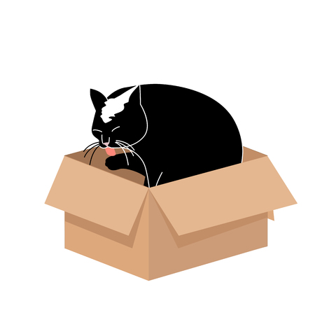 Cute Big Cat Licking a Paw in a Small Cardboard Box. Simple illustration for cards, prints, vector icon for web design