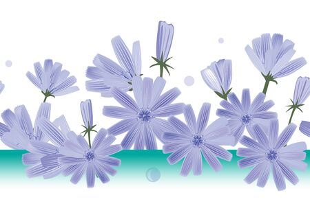 Chicory flowers vector seamless pattern. Design for wallpapers, textile, cards or chicory extract packaging