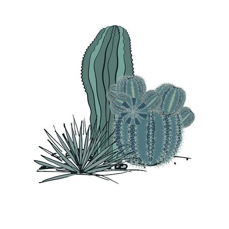 Decorative composition composed of groups of cacti and agave. Vector illustration isolated on white background Illustration