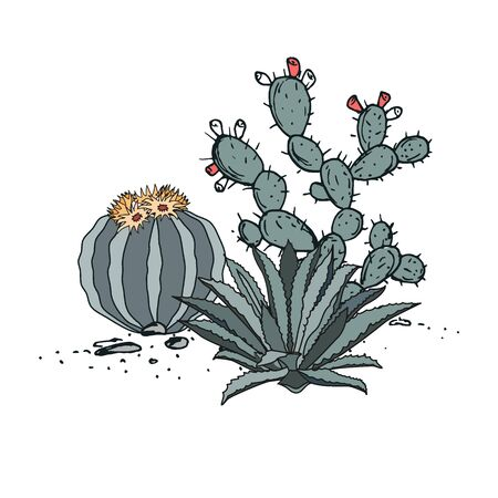 Decorative composition composed of groups of cactus, prickly pear, and agave. Vector illustration isolated on white background Illustration
