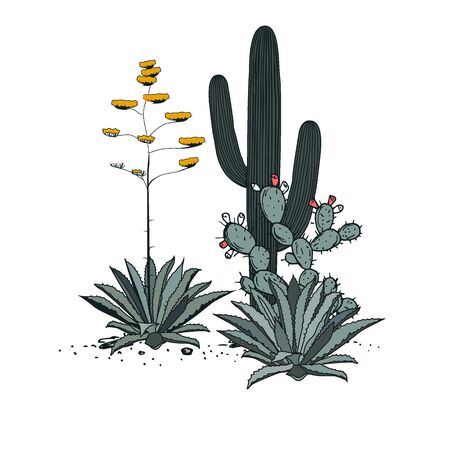 Decorative composition composed of groups of saguaro cactus, prickly pear, and blooming blue agave. Vector illustration isolated on white background.