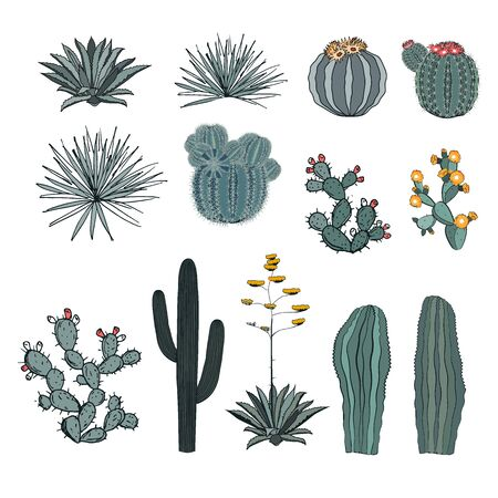Set saguaro cactus, blooming cacti, prickly pear, agaves, and yucca. Vector collection isolated on white background. Ilustrace