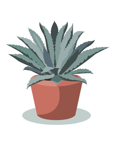 Blue Agave plant in a flower pot, vector illustration