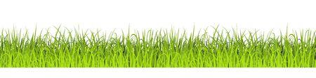 Green Grass Seamless Background. Vector illustration. Lawn border