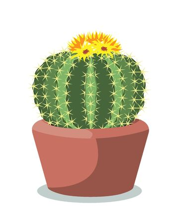Big blooming cactus ball in a red ceramic pot, decorative desert plant called notocactus or eriocactus. Vector illustartion isolated on white
