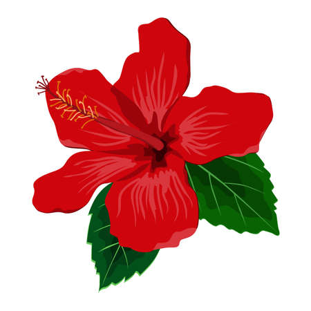 Hibiscus flower with leaves, flat vector illustration. Tropical exotic Hawaii plant isolated on white