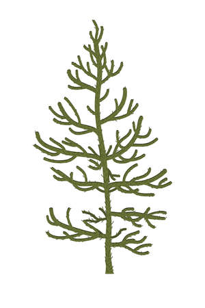 Monkey puzzle Tree or Araucaria araucana. Vector illustration