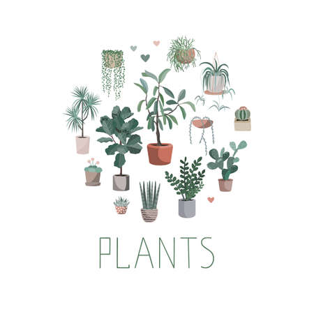 House plants arranged in circle, vector hand drawn illustration Cute home plant pots, cactuses and succulents. Isolated cartoon item in Scandinavian style