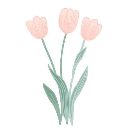 Doodle vector pink tulip flowers isolated on a white background. Creative illustration for your design