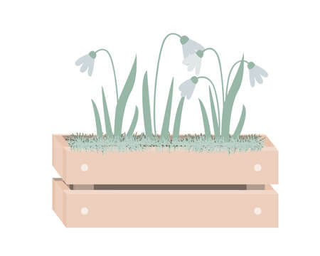 Cartoon snowdrops in wooden box with moss. Spring design in Scandinavian style. Vector illustration isolated on white Vettoriali