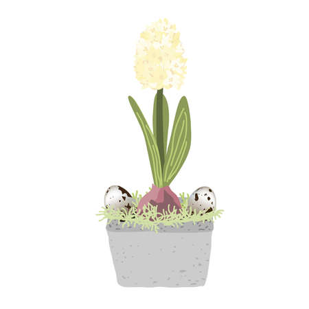 Blue hyacinth in pot isolated on white background decorated with quail eggs and moss. Bulb spring flower vector illustration, Easter design element