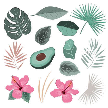 Vector set with wild tropical rainforest plants leaves and flowers. Isolated elements of tropic design