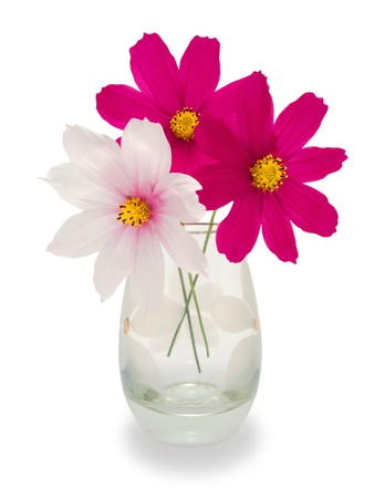 two purple and one white flower in a vase isolated 写真素材
