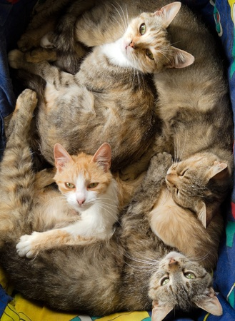 many cats are together and have fun 写真素材