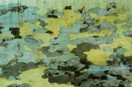プラタナス: texture on the basis of sycamore bark