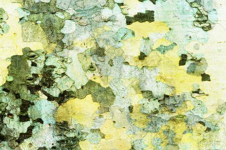プラタナス: プラタナスの樹皮に基づくテクスチャ
