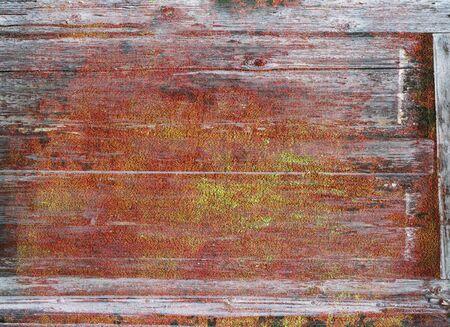 rudeness: part of old wooden door in poor condition with peeling paint