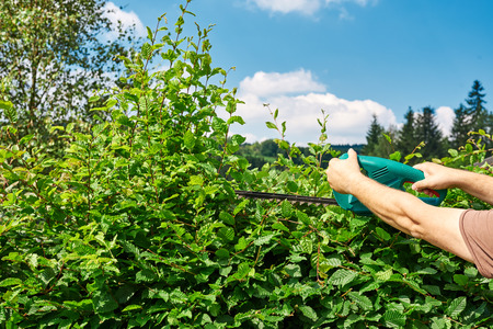 Cutting a hedge, gardening Stock Photo
