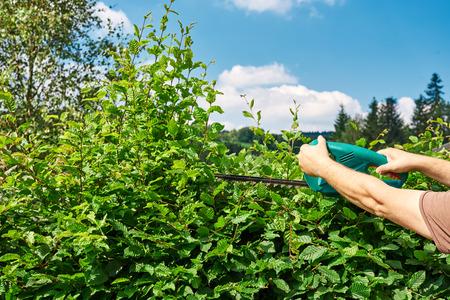 hedge: Cutting a hedge, gardening Stock Photo