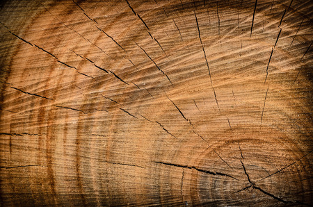 tree disc: Stump of a tree, section of the trunk with annual rings