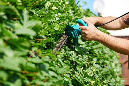 Cutting a hedge, gardening 版權商用圖片