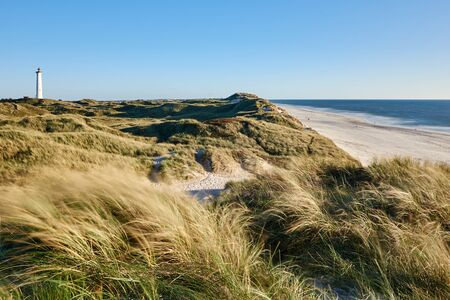 german north sea region: North sea coast with dune and a lighthouse in the background
