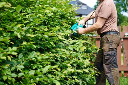 Cutting a hedge with electrical hedge trimmer Stock Photo