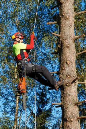 Bûcheron avec scie et harnais grimpant dans un arbre Banque d'images - 86606818