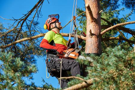 Leñador con sierra y arnés trepando a un árbol